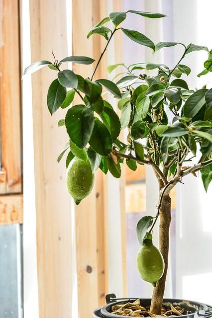 Rastlinam pred prenosom na toplo, olajšamo šok