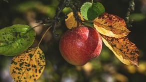 Enostavno preprečevanje bolezni rastlin