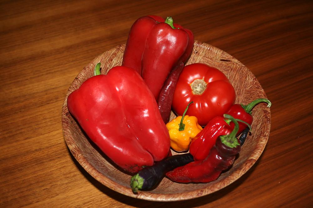 3. način: ekološka gnojila TERRA - paradižnik, paprike, čiliji: kmetija Vovk, Polskava