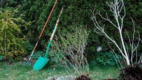 Jesensko sajenje sadnega drevja in jagodičevja