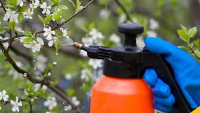 Škropljenje sadnega drevja - pravila