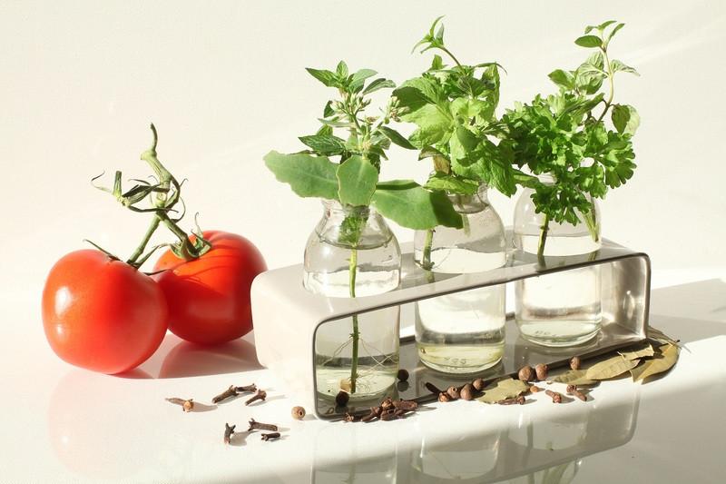Zelišča brez težav vzgajamo v kozarcih