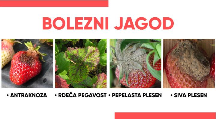 Bolezni jagod- kako jih prepoznati