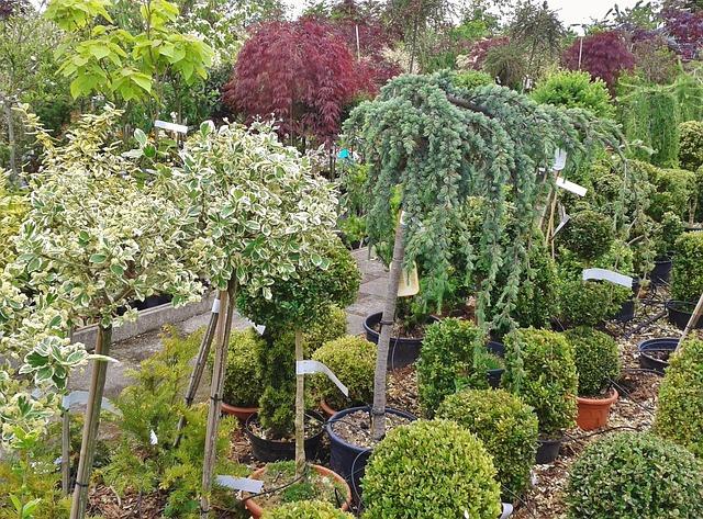 Sadike sadnega drevja kupujemo v drevesnicah
