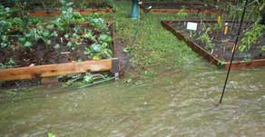 Poplava, dež in škoda na vrtu