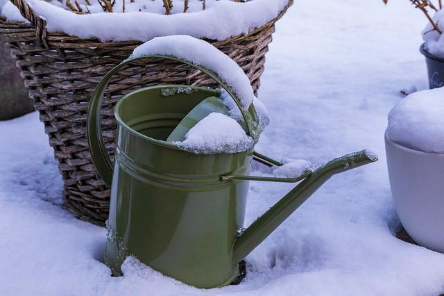 Preden zemlja zmrzne ali pade sneg, ne pozabi zaliti sadik!
