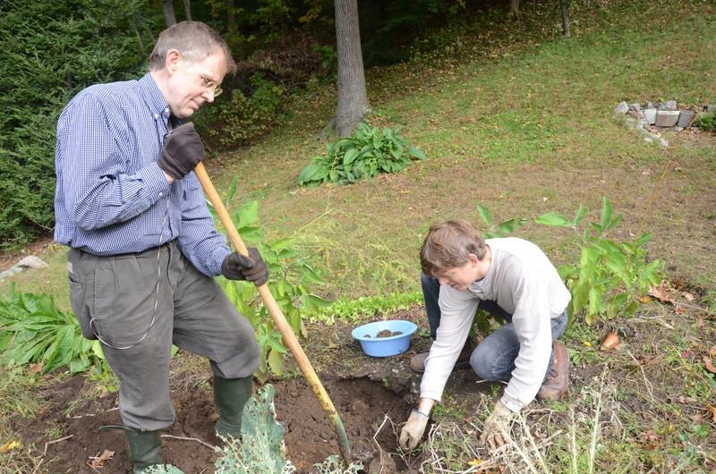 Sajenje sadnega drevja zahteva zaporedne korake