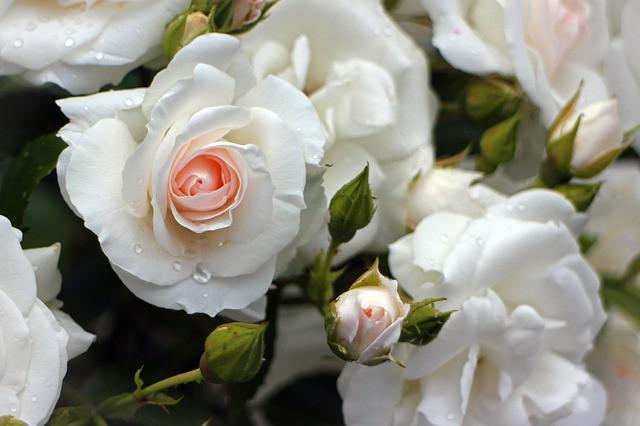 Poskrbite za zdrave vrtnice