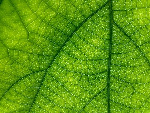 Poznati moraš videz zdravih listov
