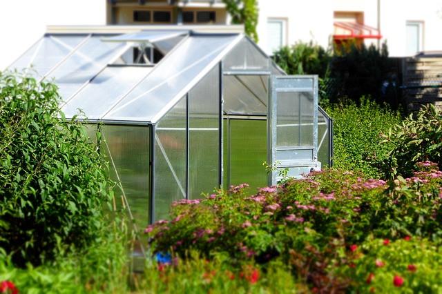 Rastlinjak, vrt in rastline je potrebno jeseni razkužiti!