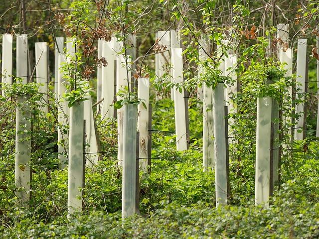 V drevesnici povprašajte o podlagi in zahtevah sadike