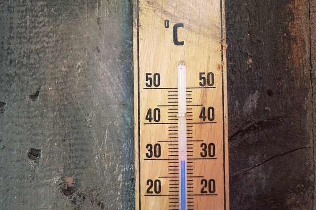 Temperatura zelo vpliva na rast solate