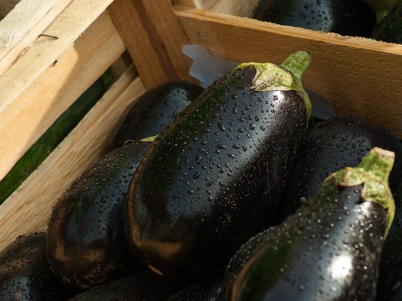 Veliko toplote, vlage in hranil = bogat pridelek