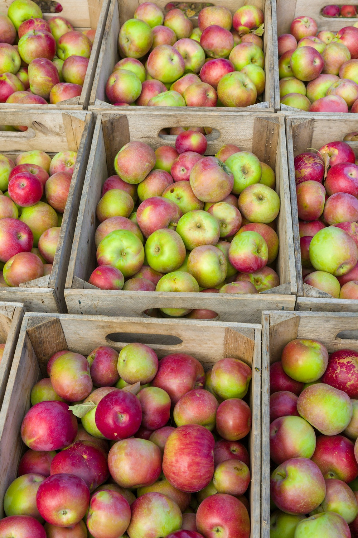 Skladiščenje sadja zahteva posebno skrb