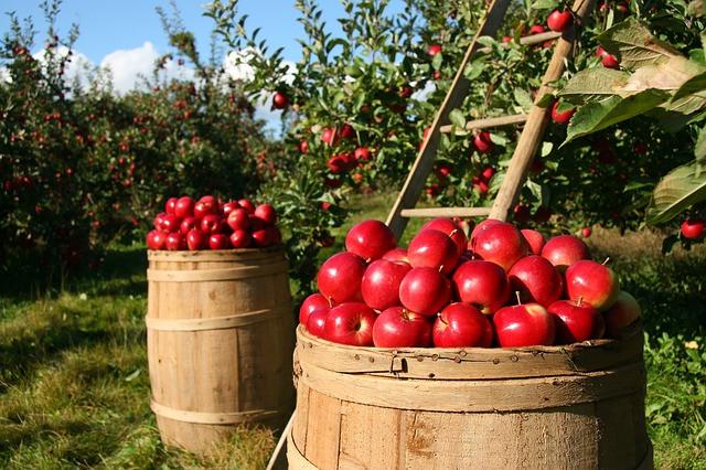 Vsi si želimo zdrav in bogat pridelek sadnega drevja