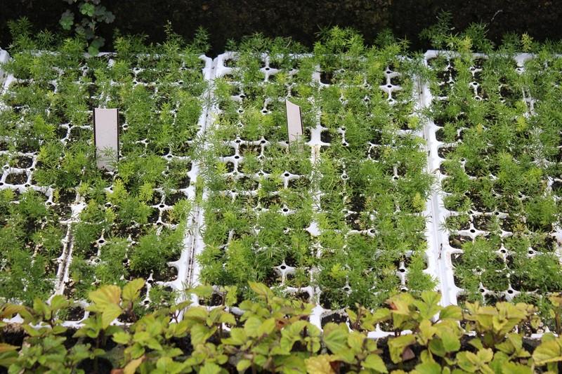 Lončke s sadikami in semeni je potrebno škropiti.
