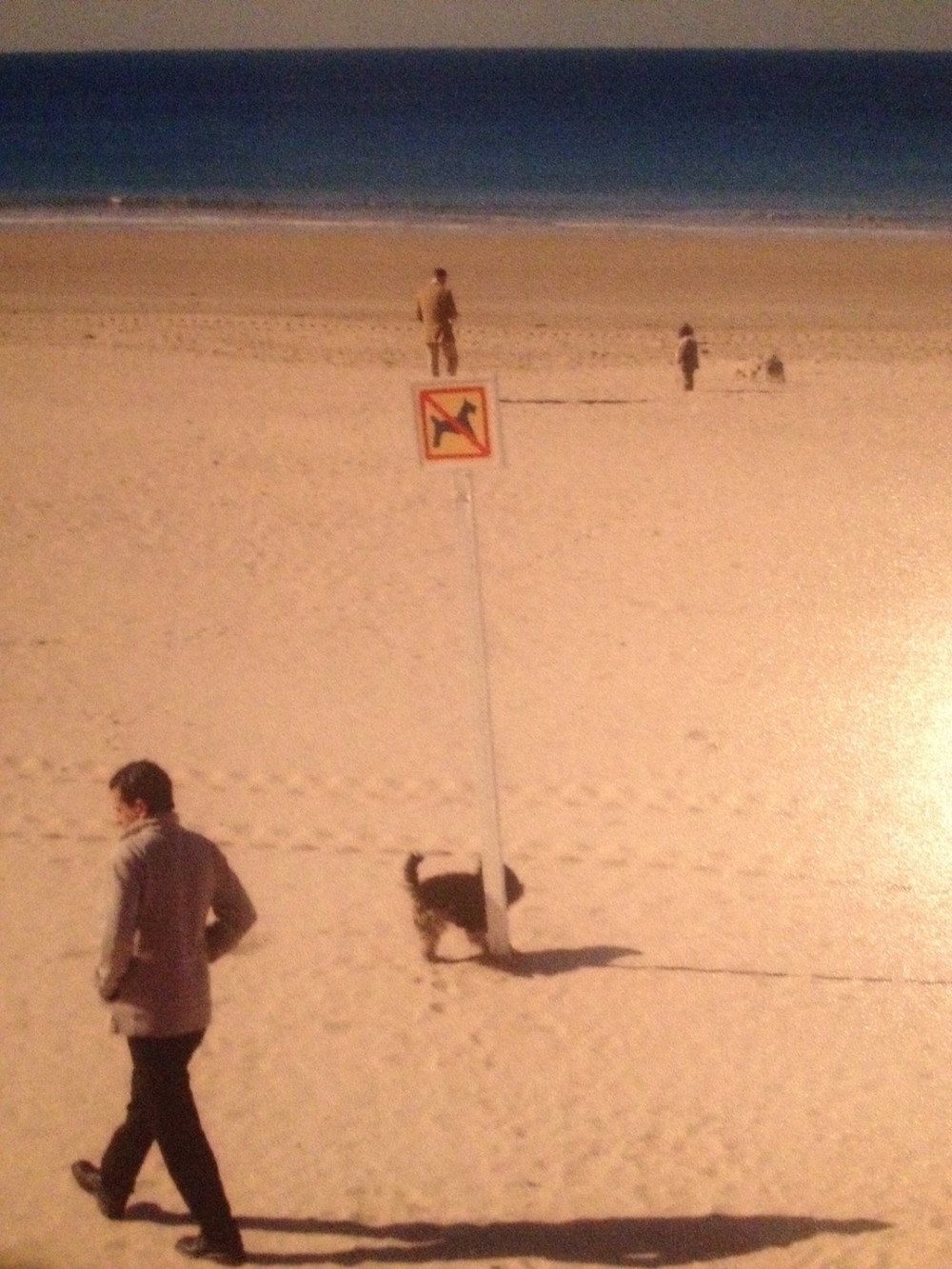 "A dog peeing on a ""no dogs allowed"" sign on the beach"
