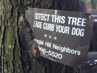 """A """"Protect This Tree"""" Sign is Killing It"""