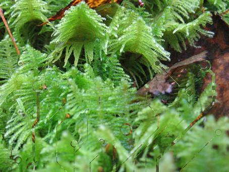 Forest UnderSound