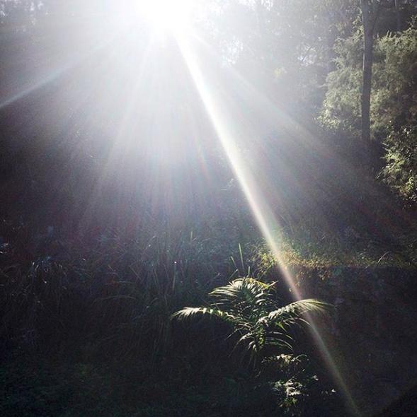 Park musings : The joy of sunlight.