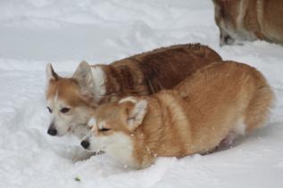 Lady Nana & Lady Foxy