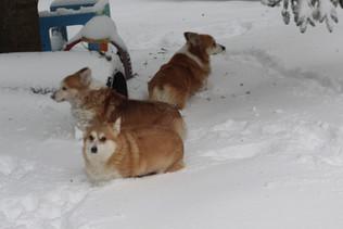 (from back to front) Princess Jazzy, Lady Nana & Lady Foxy
