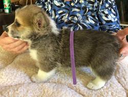 Purple Boy (6-weeks-old)