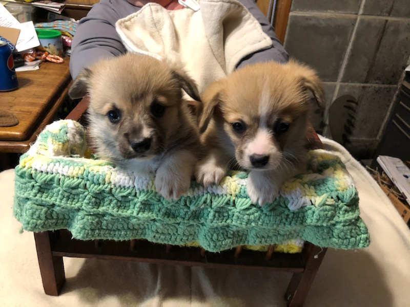 Boy (left) & Girl (right) (5 & 1/2 weeks old)