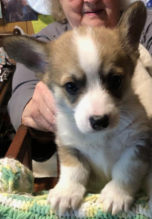 Boy (6 & 1/2 weeks old)