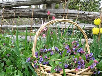 Homegrown organic medicinal herbs