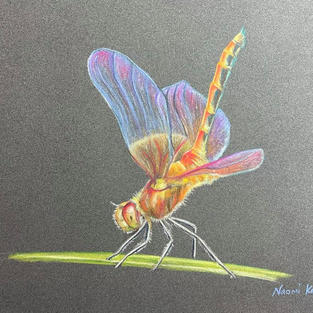 Magical Dragonfly
