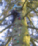 Queen Katherine Tree Climb Feb 07 (6).JP
