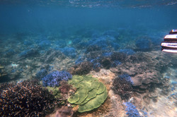 豐富多樣水下資源