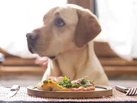 Mon chien et le repas de Noël
