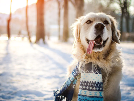 Emmener son chien en vacance l'hiver.