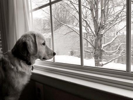 Occuper son chien par mauvais temps