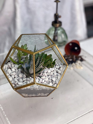 Terrarium Design Crate