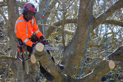 Arborist health and safety