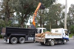 Professional tree equipment