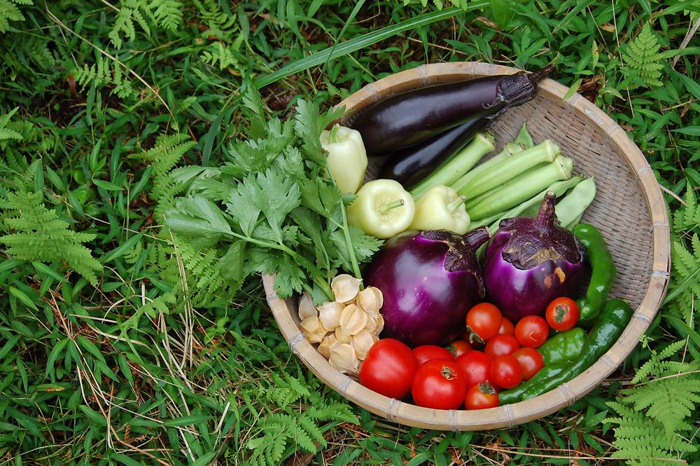 花gri耕房 夏野菜