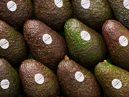 Contents for Launching Autumn Avocados
