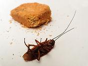 cockroach-4404733_1920.jpg