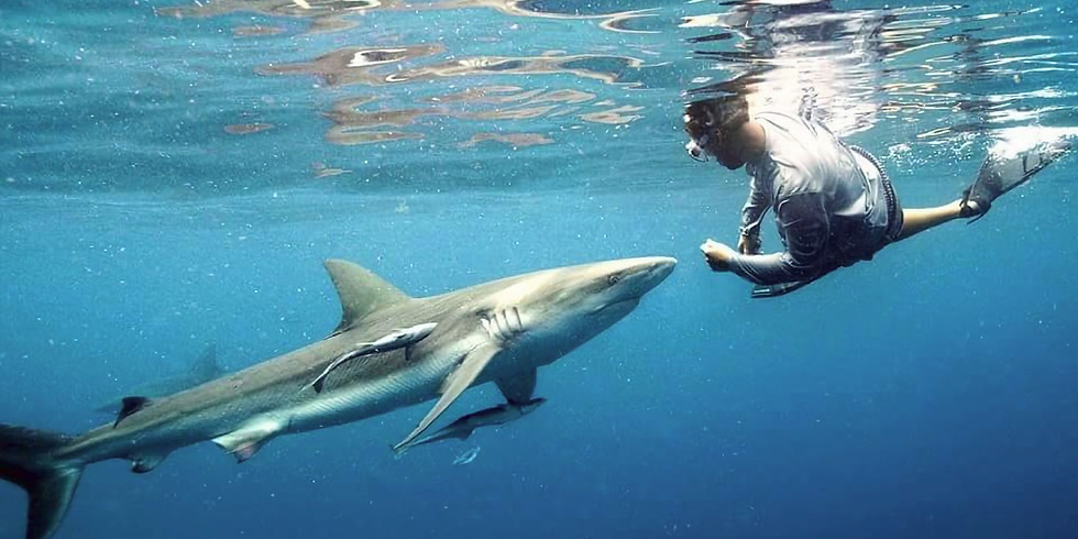 Sharks! With Author and Conservationist William McKeever