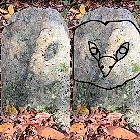 Owl face split photo.jpg