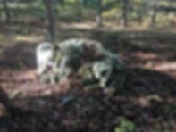 resting buffalo outline glyph.JPG