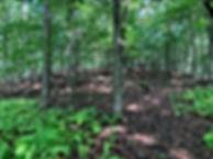 earthen mound.jpg2.JPG