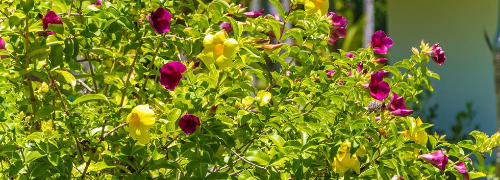 Flores Nativas