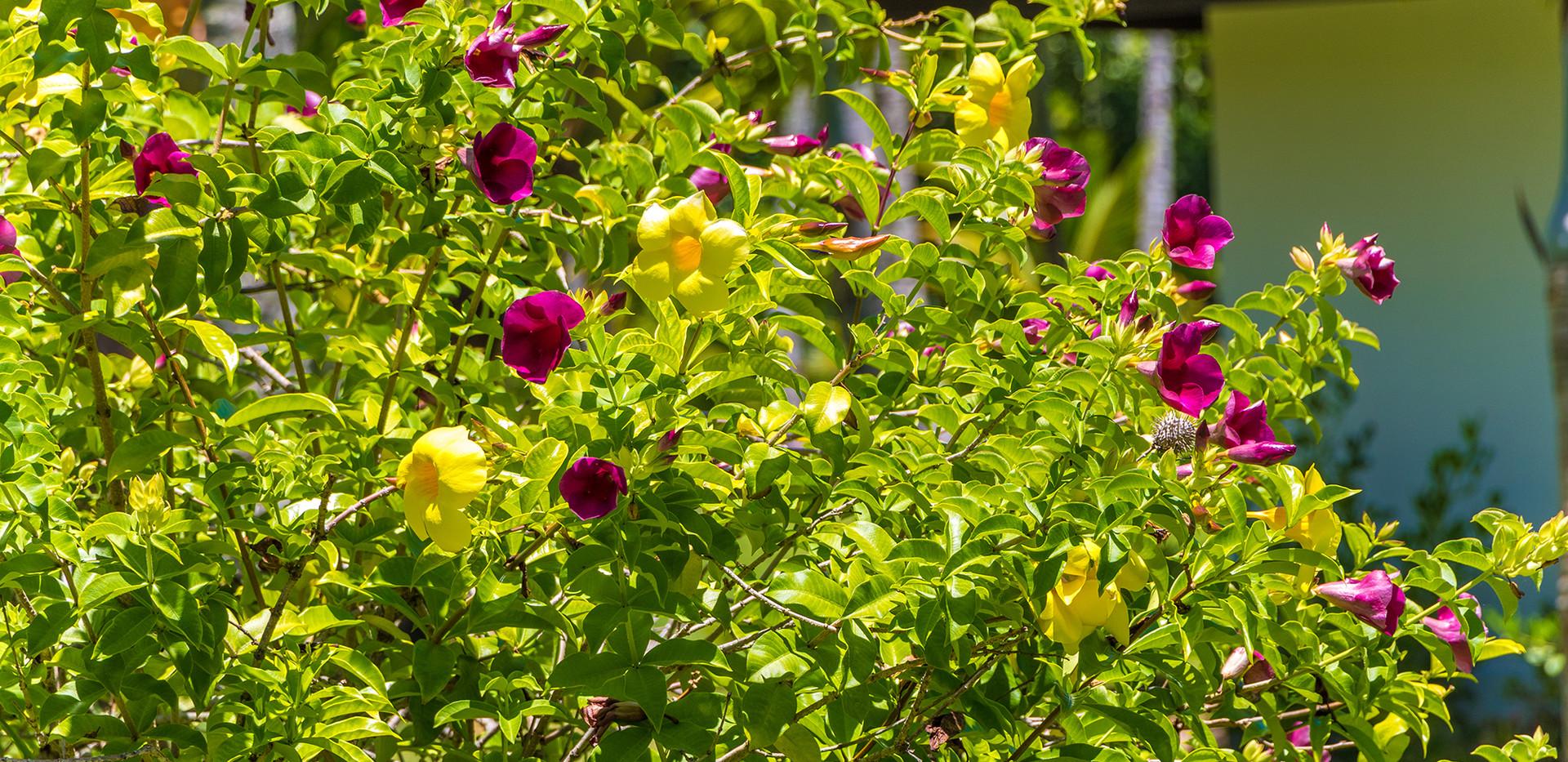 Flores Nativa