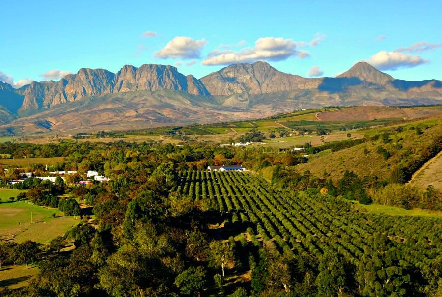 Stelenbosch wine farm view, wine tasting place in South Africa, Cape Town