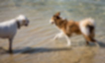 חוף הכלבים dogs playing in the beach.jpg